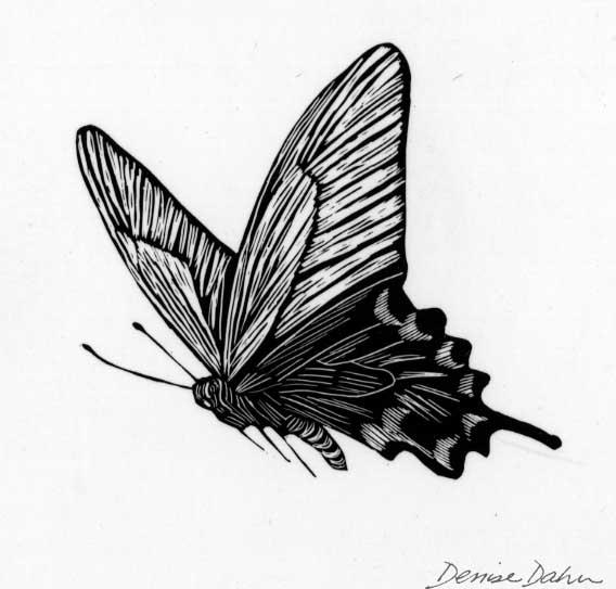 Butterfly scratchboard - photo#17